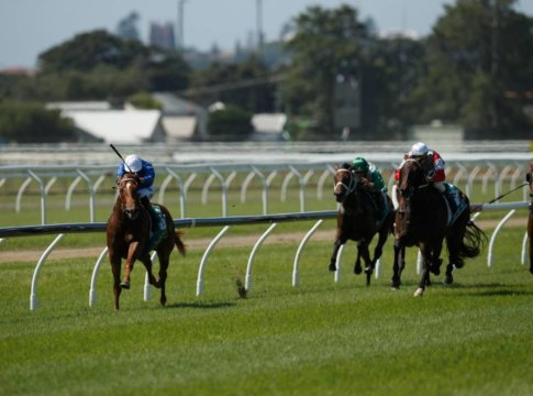 Horse Racing Rails