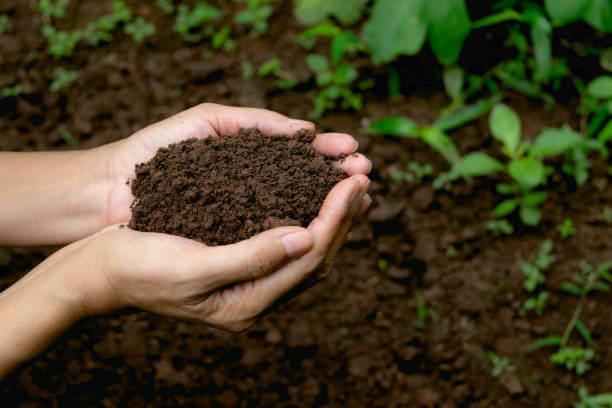 soil testing